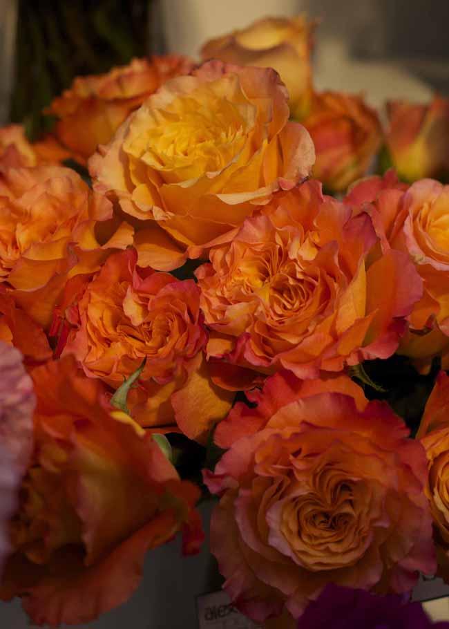Free Spirit Garden Roses