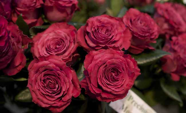 Precious Moments Garden Roses