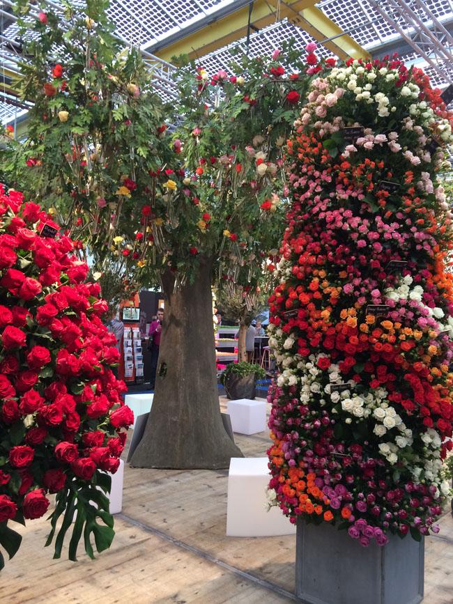 DeRuiter Rose Display