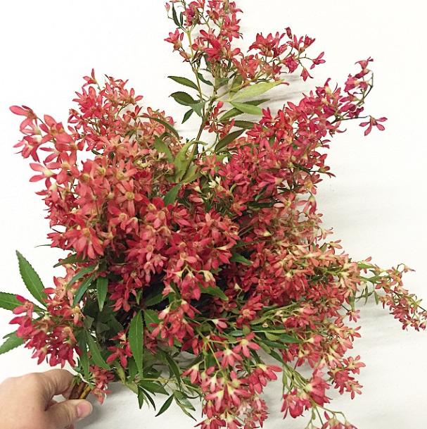 Flirty Fleurs The Florist Blog