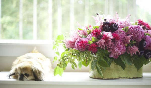 Bella Fiori, Washington - Johann the Peke with a floral design by Alicia of hot pink peonies, scabiosa, and monarda