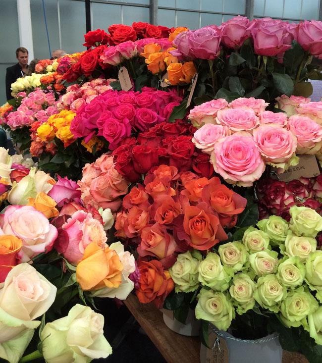 Qualisa Roses