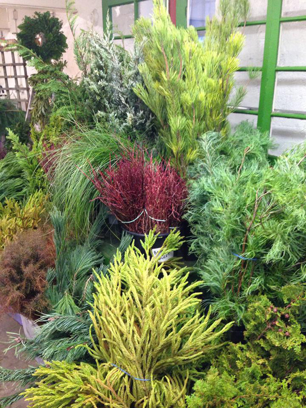 Seattle Wholesale Growers Market - Winter Foliages