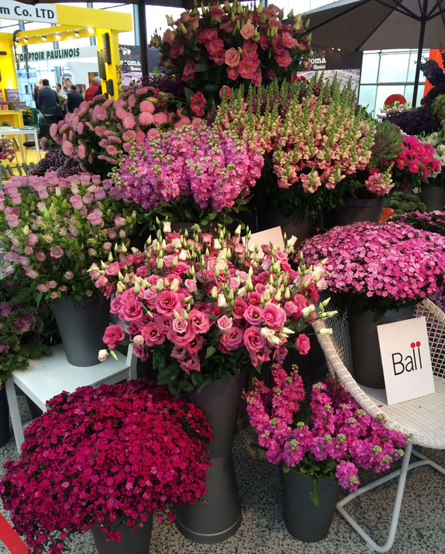 Display of pink flowers by Ball