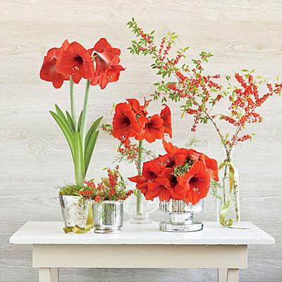Red Amaryllis Table Setting