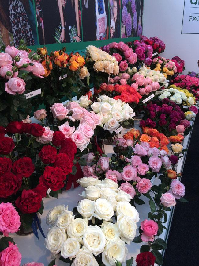 Alexandra Garden Rose Farm