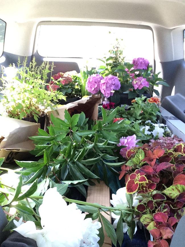 gardening in washington