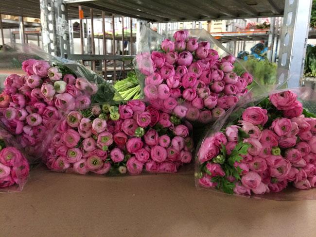 Holex Flower Holland - Pink Ranunculus