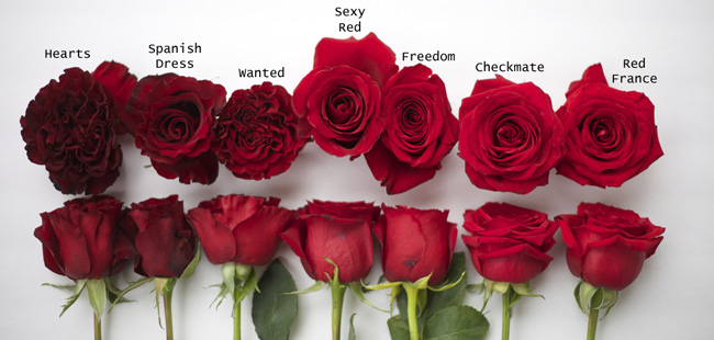 Red rose study flirty fleurs the florist blog - Pics of roses and hearts ...