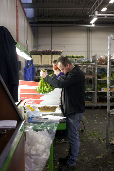 Holex Flower Holland - Inspecting flowers for bugs prior to shipping.
