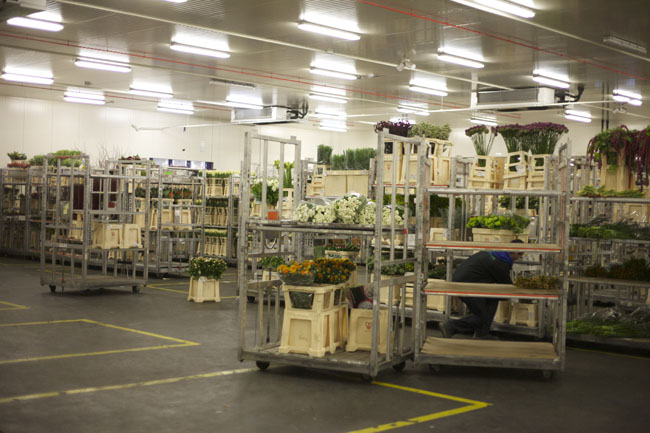 Holex Flower Holland - Carts of flowers in the cooler prior to packing.