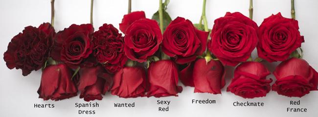 Red Rose Study Flirty Fleurs The Florist Blog
