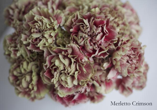 Merletto Crimson Carnation