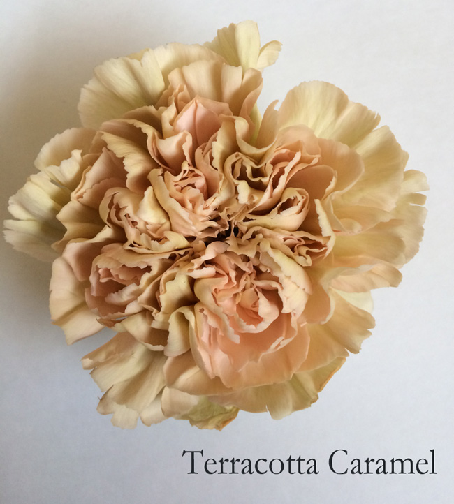 Terracotta Caramel