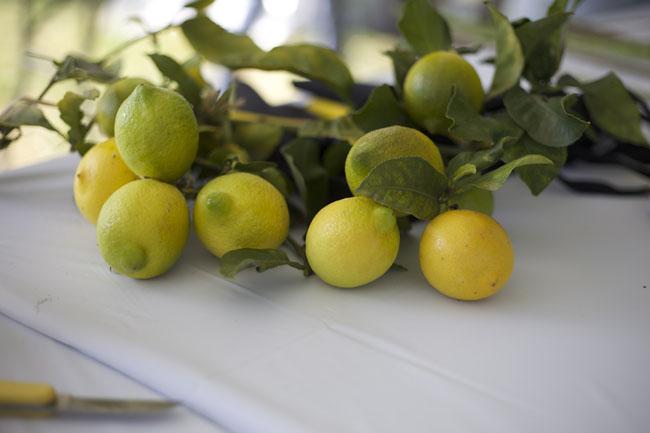 Lemons from Rose Story Farm
