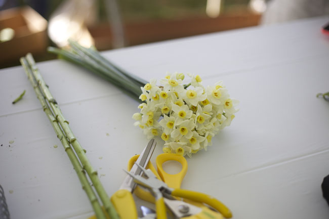 Narcissus from Florabundance