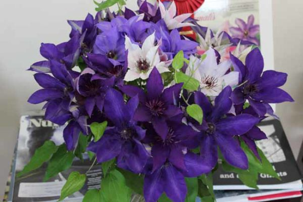 Roseville Clematis Farms
