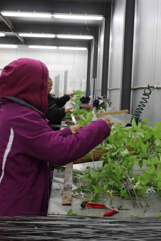 Female workers in coats in the production line creating cut flower clematis product