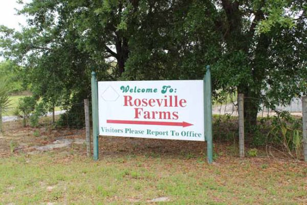 Roseville Clematis Farm