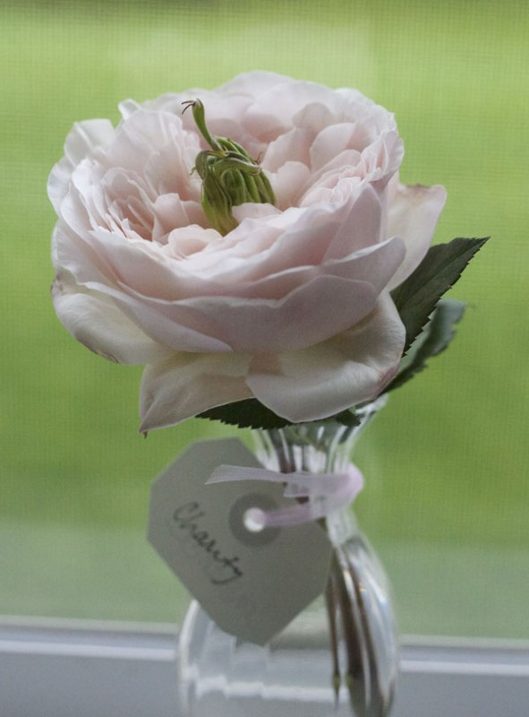 David Austin Garden Roses | Flirty Fleurs The Florist Blog ...