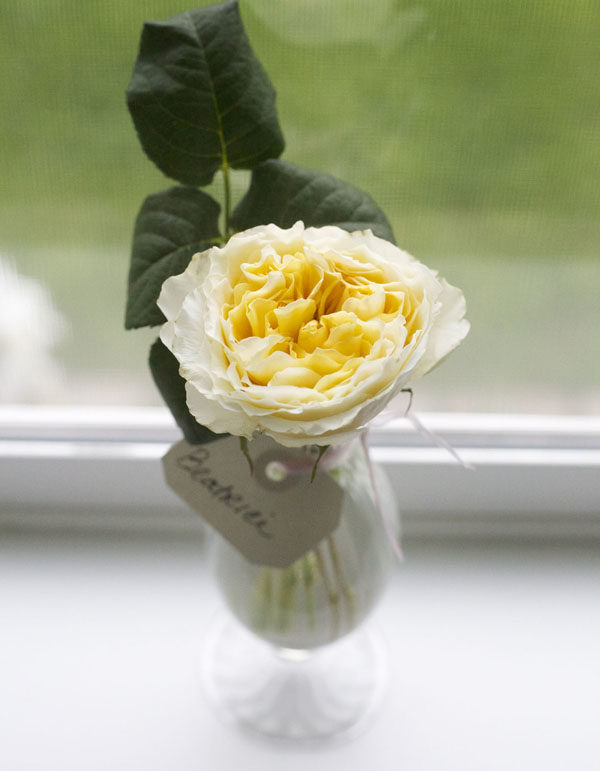 Beatrice Yellow David Austin Garden Rose