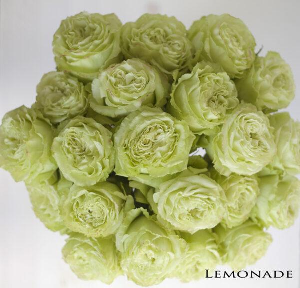 Flirty Fleurs Rose Studies - Green Rose Varieties
