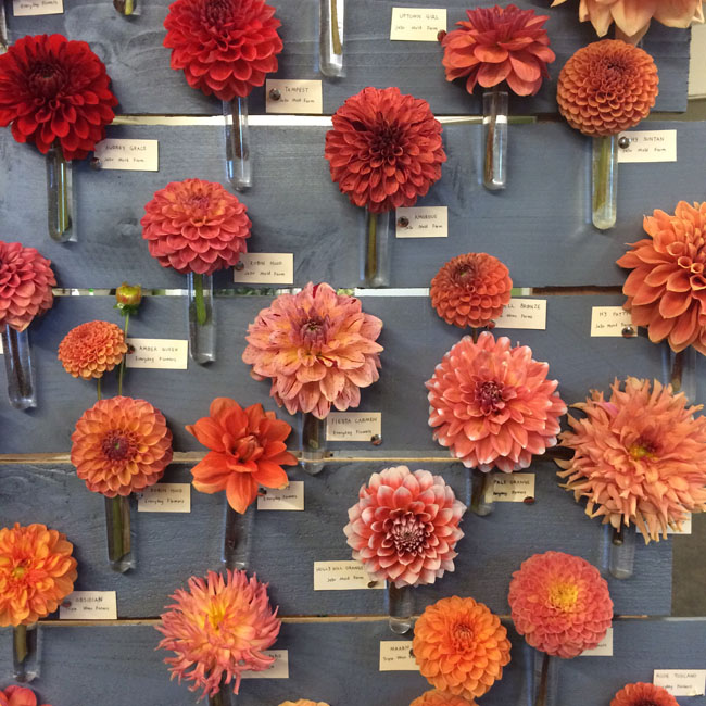 The Dahlia Wall at Seattle Wholesale Growers Market