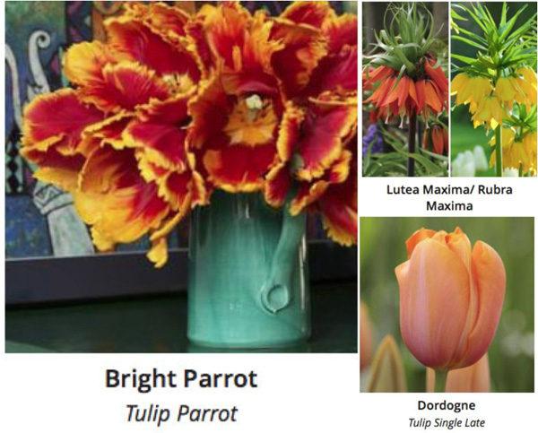 Longfield Gardens Orange Tulips and Fritallarias