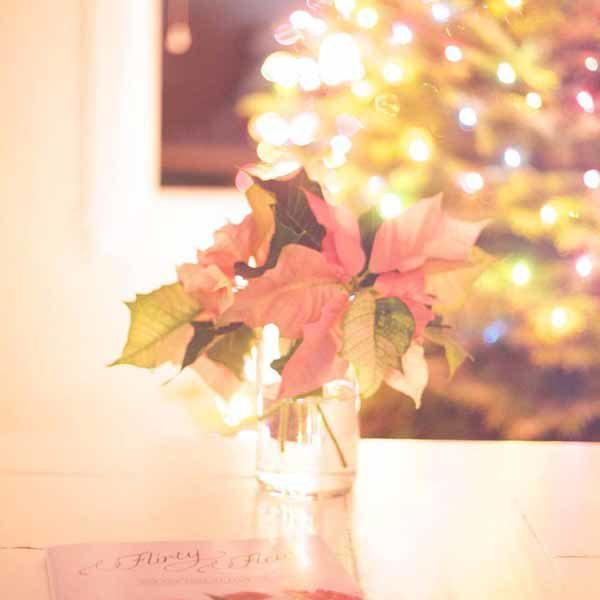 Flirty fleurs poinsettia