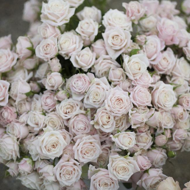 Florabundance Design Days 2016 - blush spray roses
