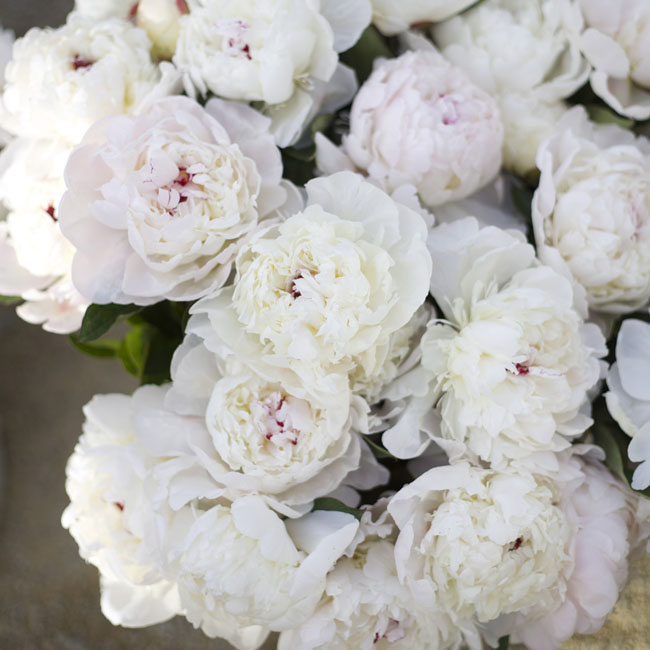 Florabundance Design Days 2016 - White Peonies