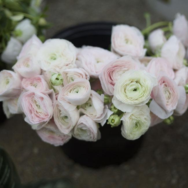Florabundance Design Days 2016 - blush ranunculus