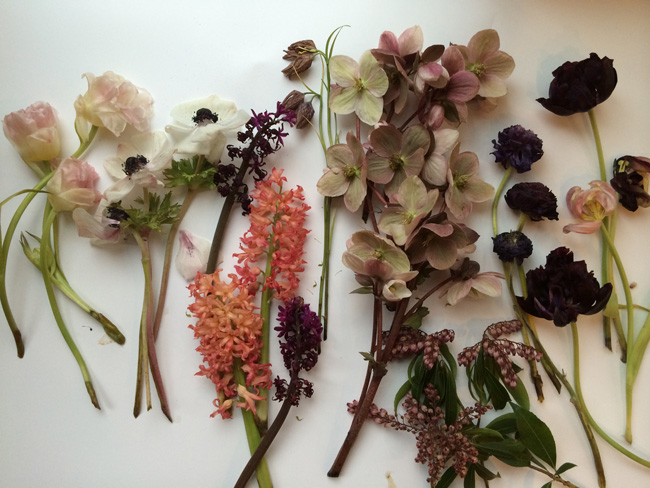 dead flowers, hellebores are still alive