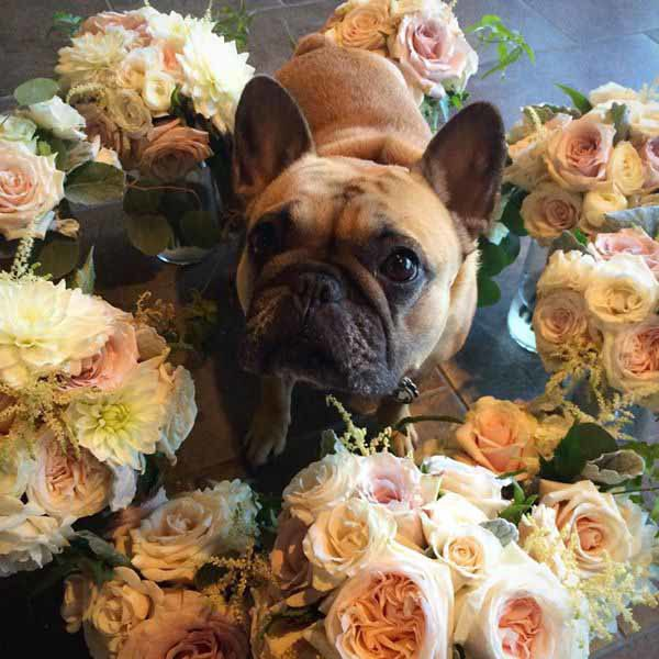 Flower Shop Dogs | Flirty Fleurs The Florist Blog - Inspiration for ...