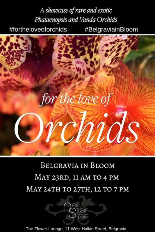Belgravia in Bloom - For The Love of Orchids