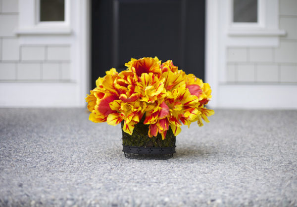 Bright Parrot Tulips and Monsella Double Tulip from Longfield Gardens, Arrangement designed by Bella Fiori/Flirty Fleurs