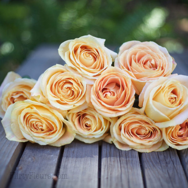 Candlelight - Alexandra Roses Via Garden Roses Direct