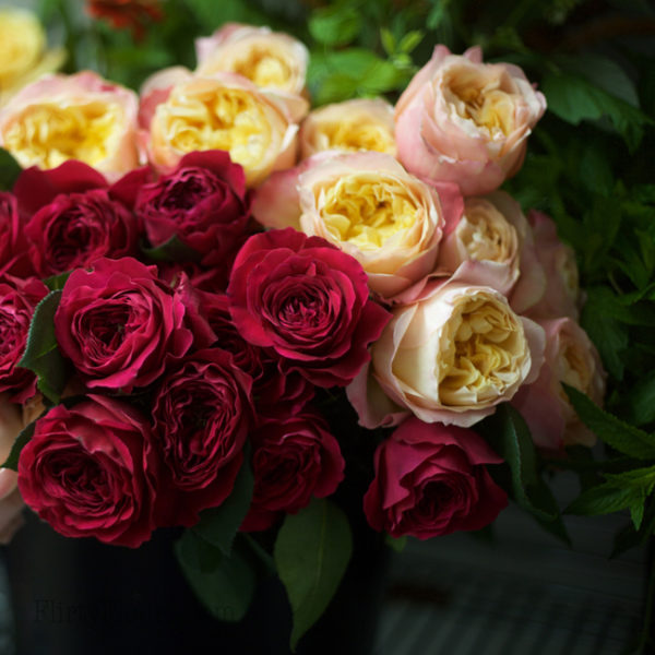 Darcey & Edith by David Austin - Alexandra Roses Via Garden Roses Direct