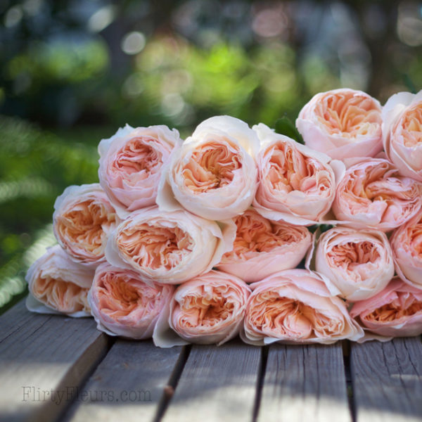 David Austin Juliet   Alexandra Roses Via Garden Roses Direct