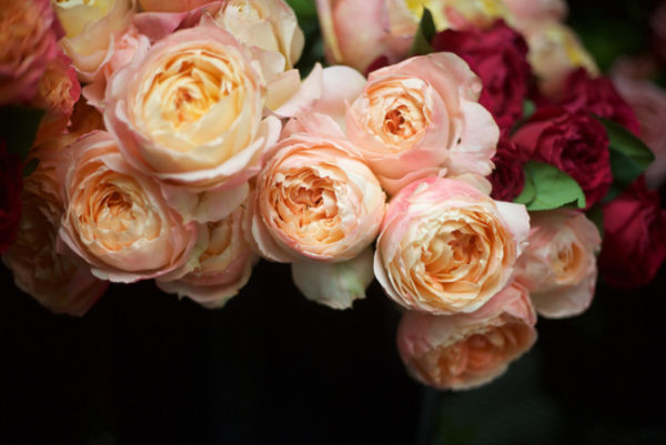 Princess Aiko - Alexandra Roses Via Garden Roses Direct