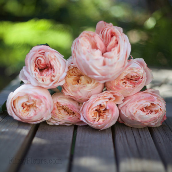 Princess Sakura - Alexandra Roses Via Garden Roses Direct