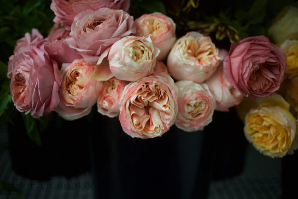 Romantic Antike & Princess Aiko - Alexandra Roses Via Garden Roses Direct