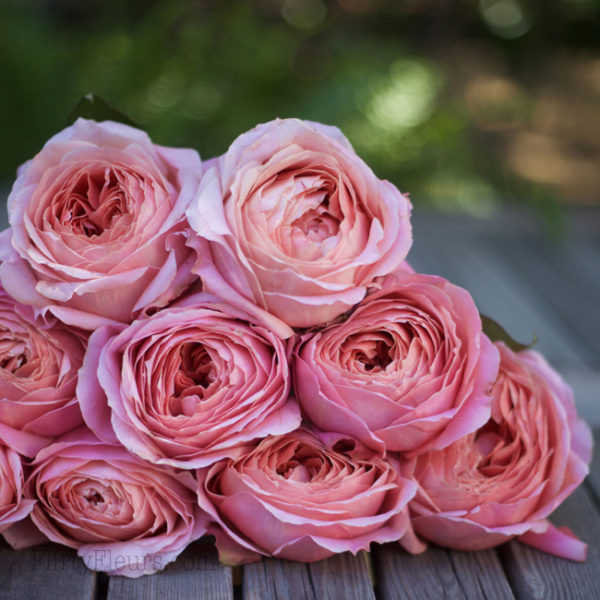 Romantic Antike Garden Roses - Alexandra Roses Via Garden Roses Direct