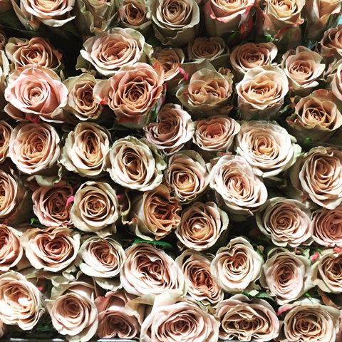Cappuccino Roses G Page