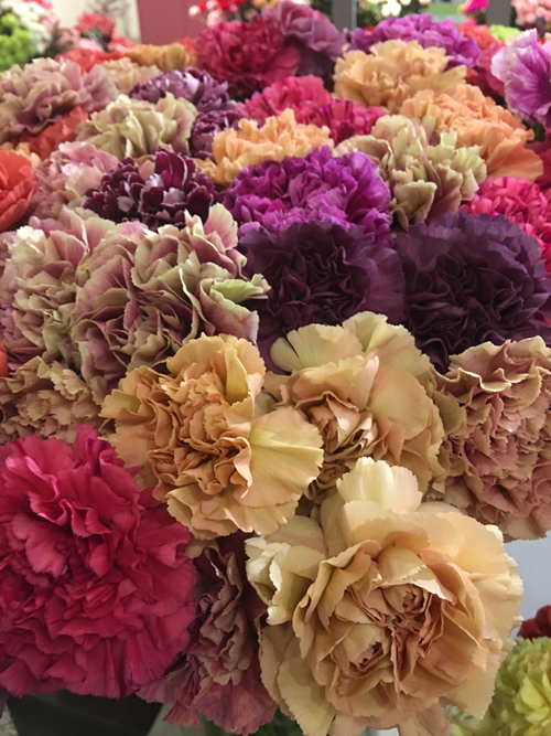 Antique Carnations