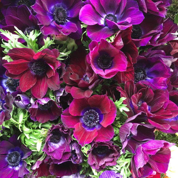 Flirty Fleurs The Florist Blog: Florabundance Design Days 2017 – The Flowers!
