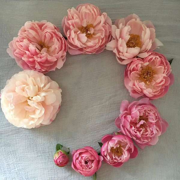 Charmed Life of the Peony - Blush Floral Design Studio