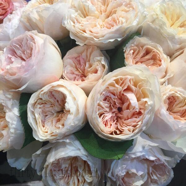Juliet Garden Rose by David Austin