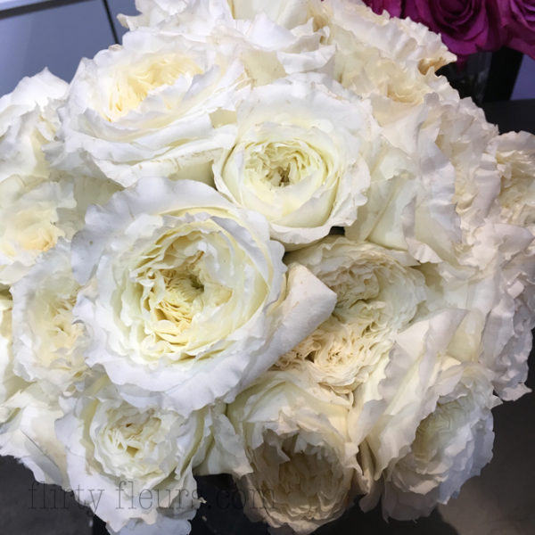 Garden roses direct flirty fleurs the florist blog inspiration david austin patience white garden rose mightylinksfo