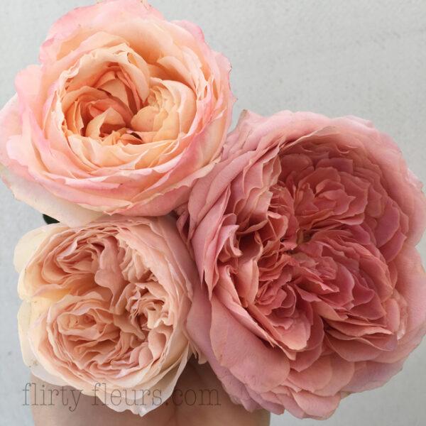 Peach Garden Roses By Alexandra Roses   Top   Princess Aiko Right    Romantic Antike Left